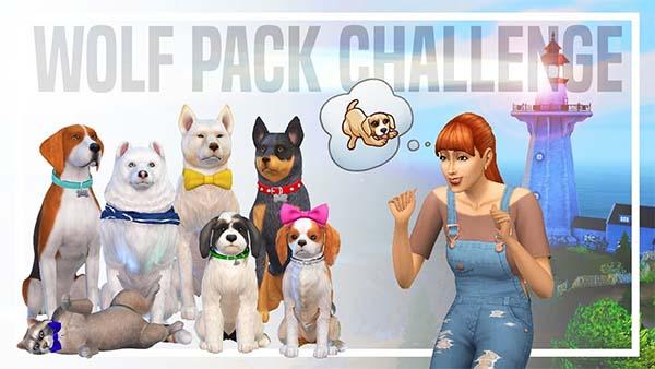 Wolf Pack Challenge