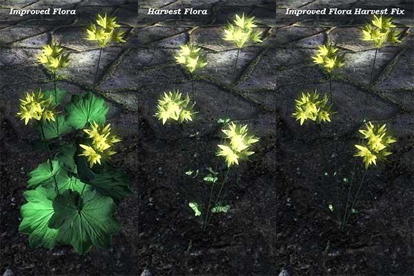 Harvest-Flora