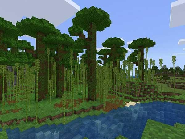 Bamboo-Safari